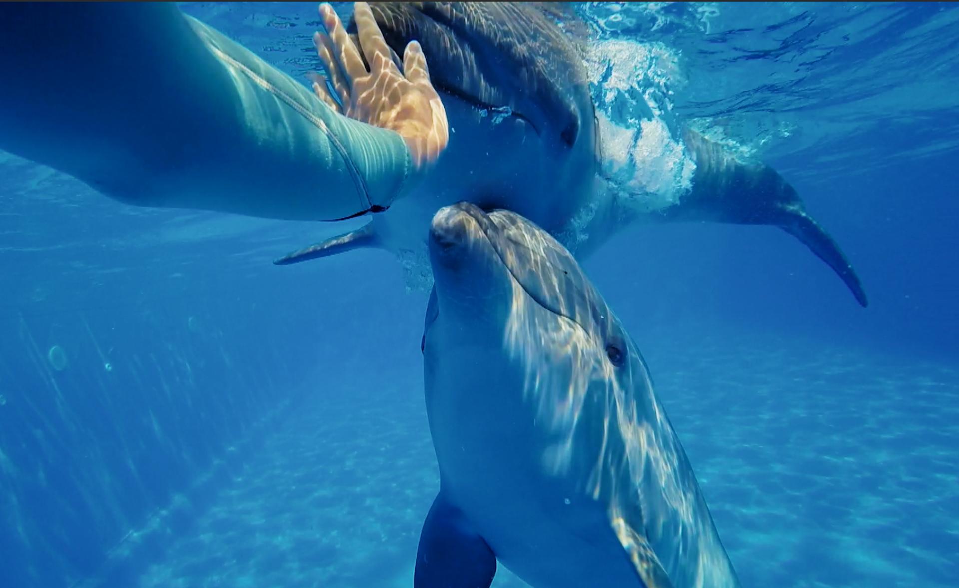 O fetiță cu dizabilități din satul Feștelița s-a împrietenit cu delfinii